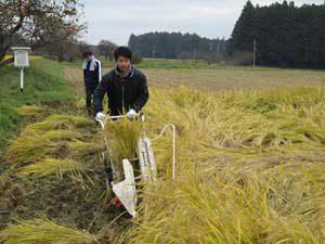 那須勇気米の稲刈り