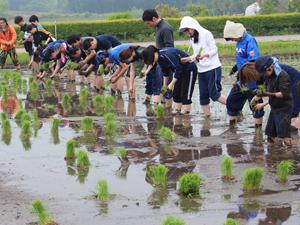 那須農場で田植え